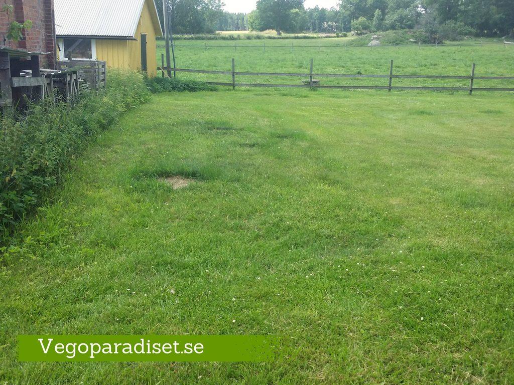 Här är platsen för min nya del av köksträdgrden. En del av gräsmattan som vetter mot ett gammalt växthus.