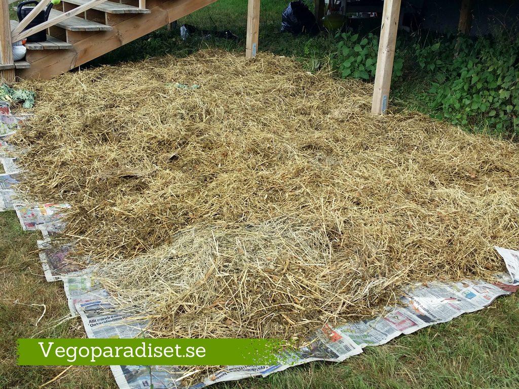 Gräsmattan täcker jag med tidningar och sedan med gräsklipp och ensilage